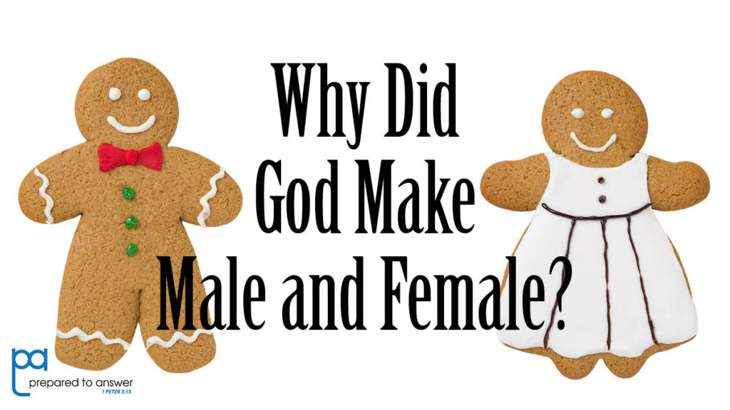 Why Did God Make Male and Female?