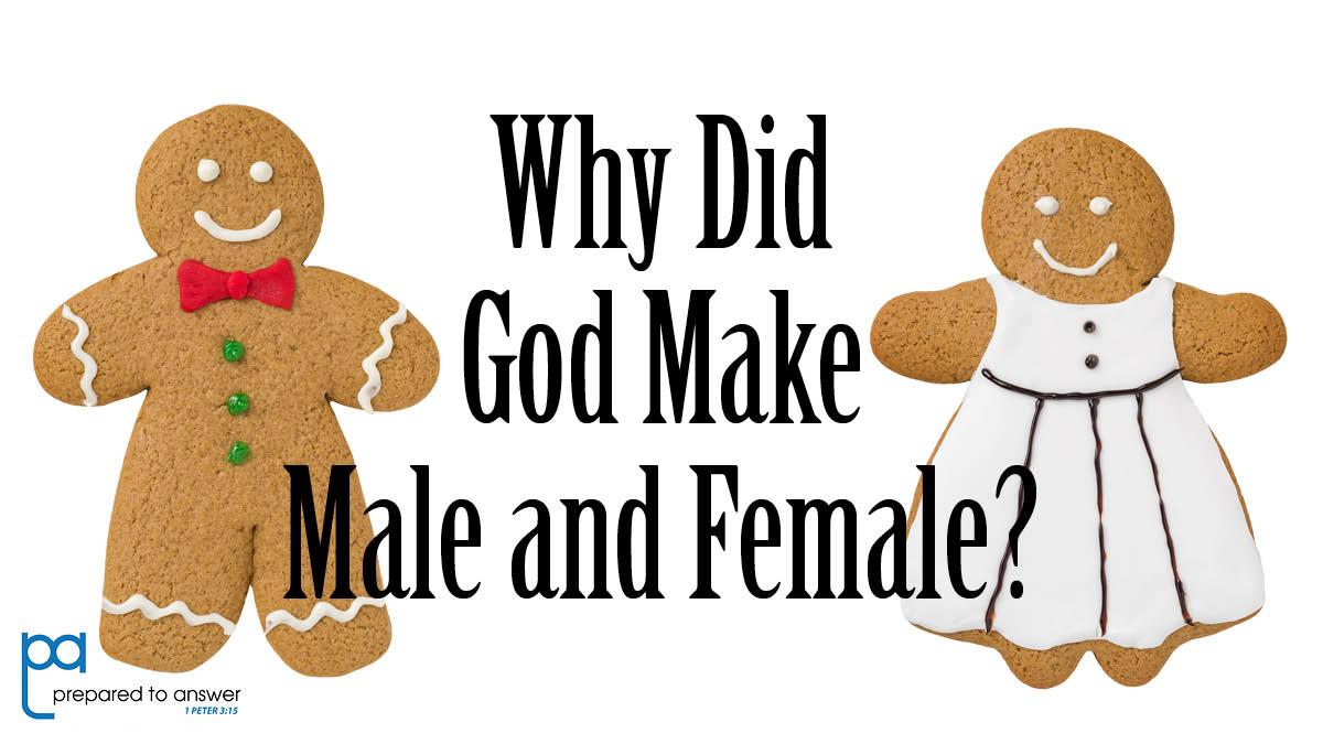 Why Did God Make Male and Female?